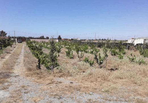 Terrain agricole équipé maison puit arbres bouznika
