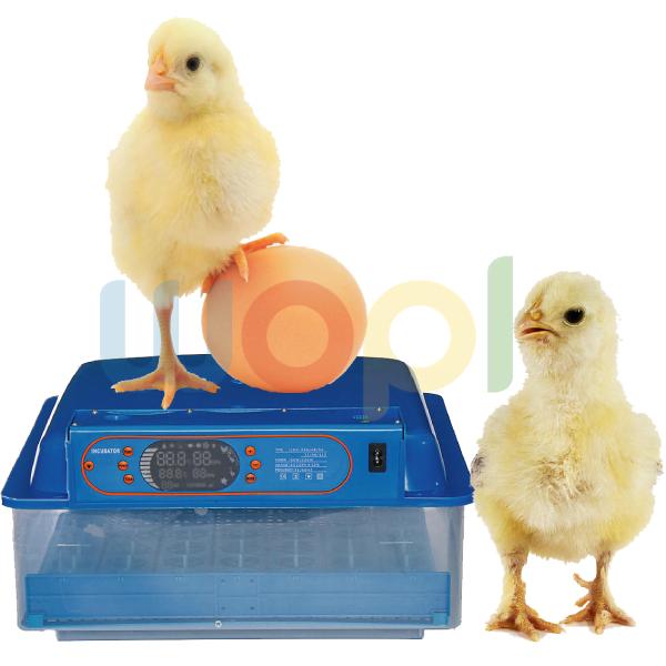 Éleveur de poulet incubateurs