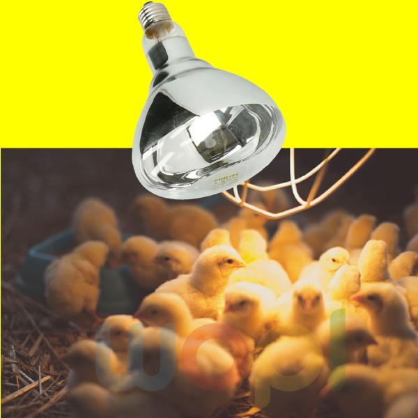 Lampe chauffante 250W de haute qualité