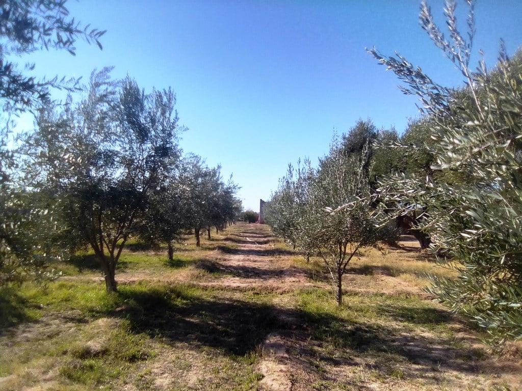 fermette titrée 1 ha 19 km de Marrakech route de Fès