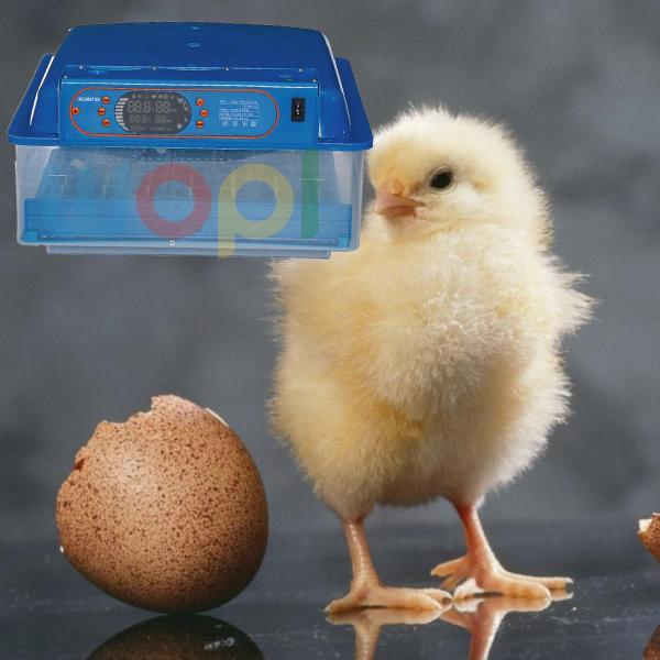Couveuse avec retournement automatique 48 œufs