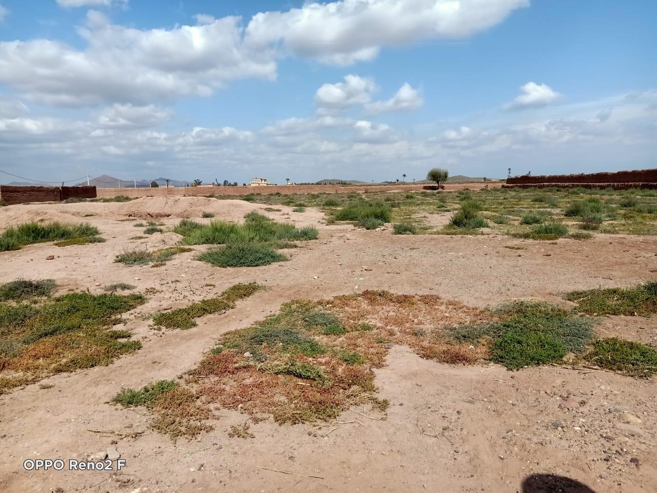 terrain de 15Ha agricole en location à la route de fes