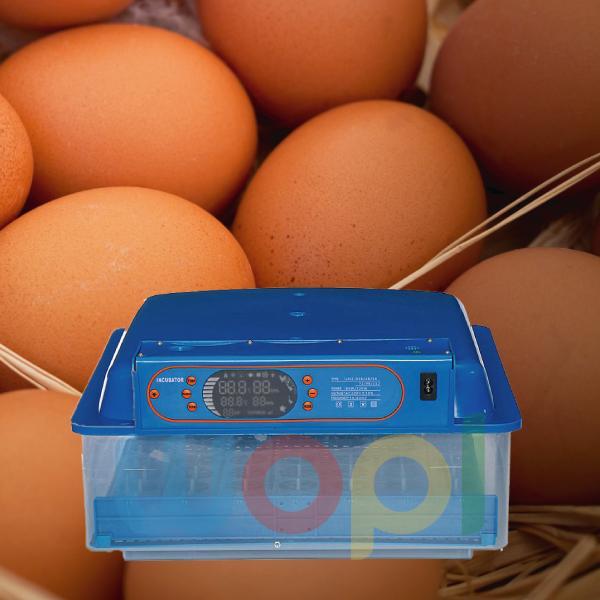 Boîte D'œufs Automatique